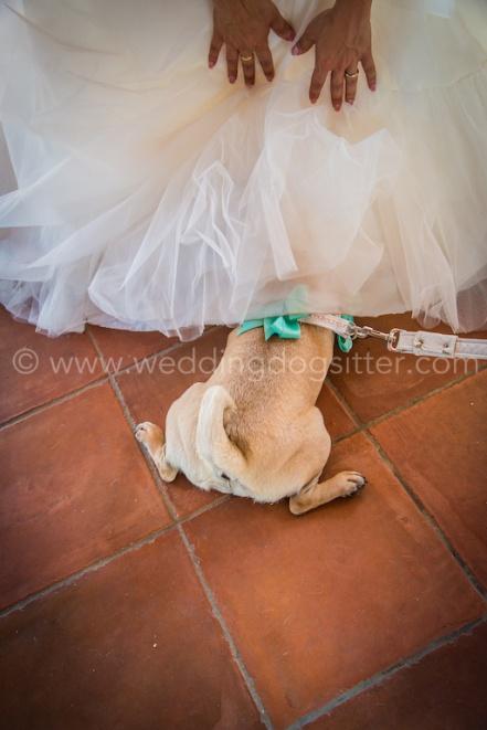 CARLINO AL MATRIMONIO CON DOGSITTER www.emotionalphotographer.com_wds_carlino (192 di 208)
