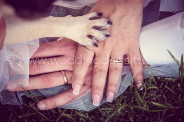 WEDDING DOG SITTER CANE AL MATRIMONIO www.emotionalphotographer.com_wds_carlino (178 di 208)