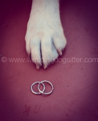 www.emotionalphotographer.com_www.weddingdogsitter.com.weddingdogsitter.com_Tommasino (129 di 138)